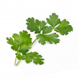 Italian Parsley Lingot