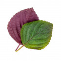 Two tone shiso Lingot®